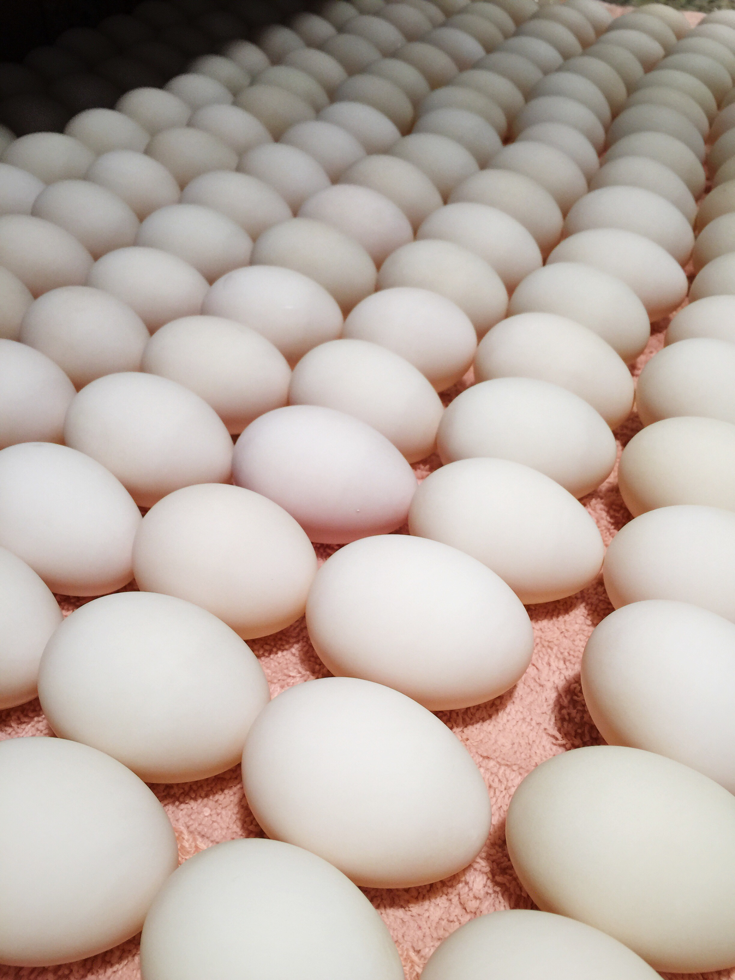 Pictures of duck eggs